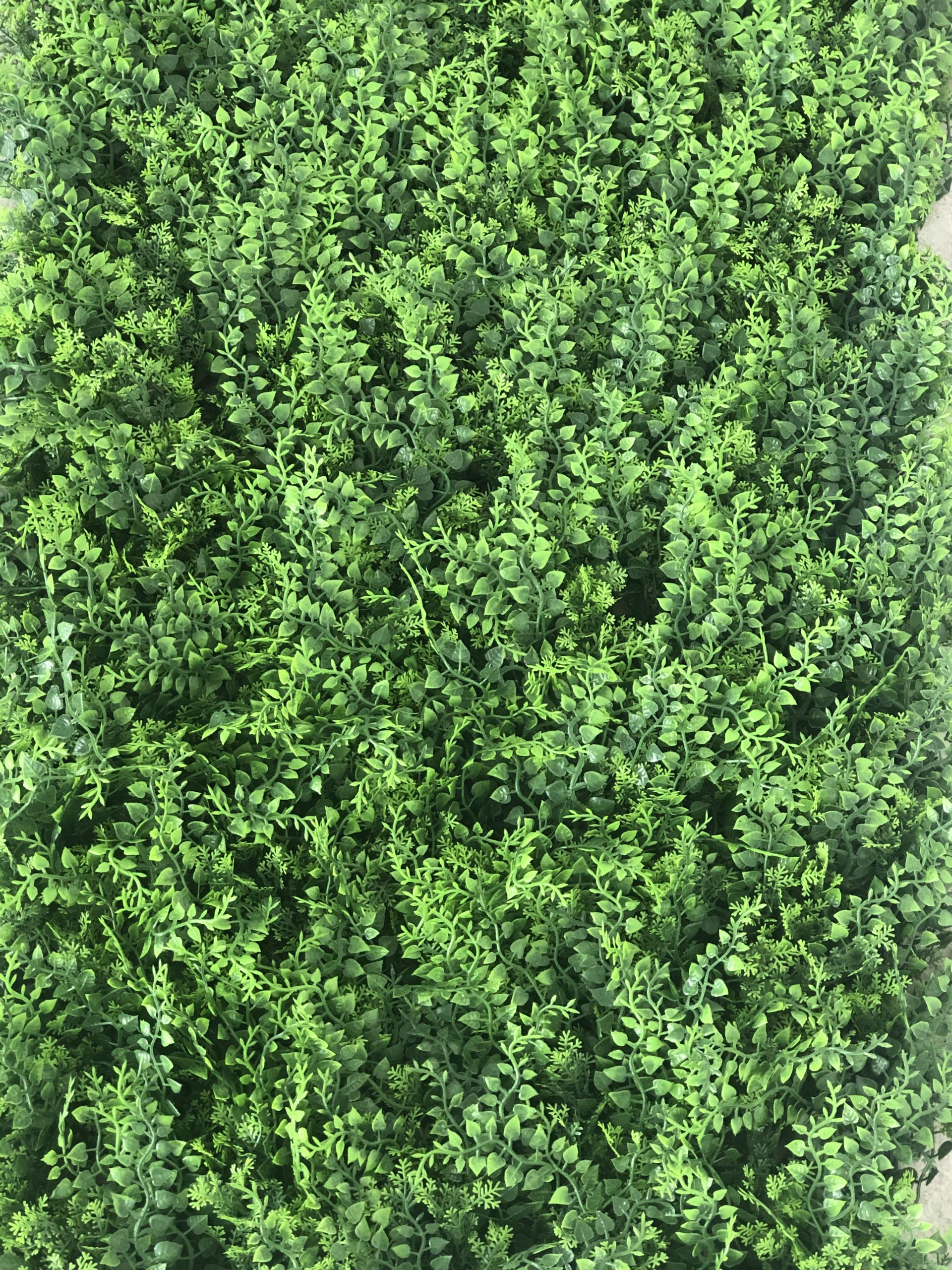 Muro verde / Follaje